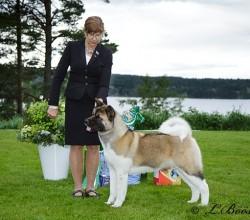 Leksand Dog Show 2016-06-18 o 19